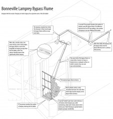 Features of the Bonneville Dam lamprey bypass system
