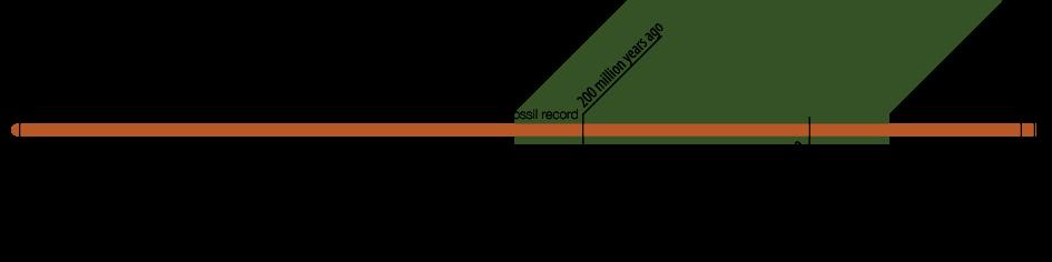 Species timeline