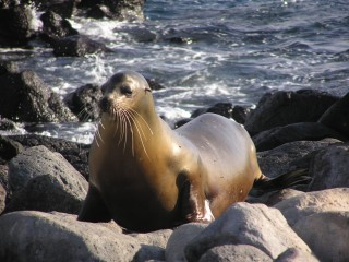 The Marine Mammal Protection Act of 1972 law prohibits, with certain exceptions, killing marine mammals in U.S. 